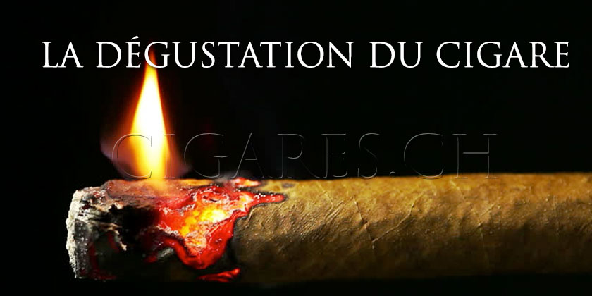 dégustation cigare